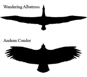 Albatross Spread